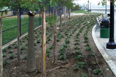 Irrigation-Services15